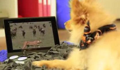 Sony Animalia for Pets