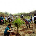 Panasonic Planted 3 Million Trees Around the World