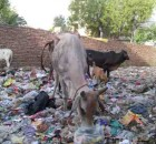 A dirty location in India's capital New Delhi. Photo by: Rakesh Raman