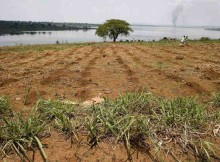 Farmland along the banks of Rwanda's Lake Sake. Photo: FAO / Giulio Napolitano