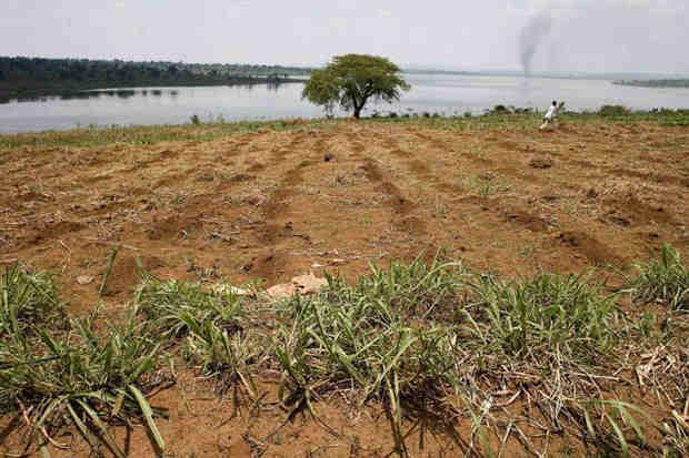 Farmland along the banks of Rwanda's Lake Sake. Photo: FAO / Giulio Napolitano