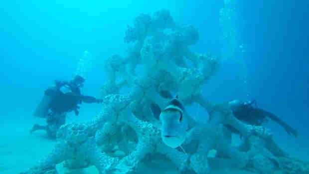 3-D Printed Reef
