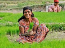 A woman farmer in Nepal. Photo: World Bank