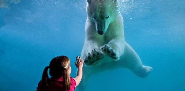 Point Defiance Zoo & Aquarium