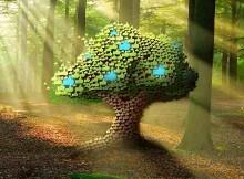 How Facebook Likes Help Grow 100,000 Trees